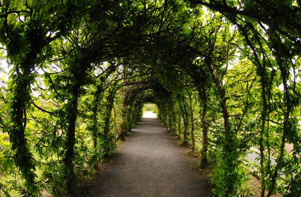 Branches entwined into a long, narrow arch/tunnel