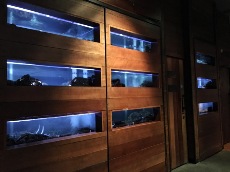 Lobster tank at Burger and Lobster