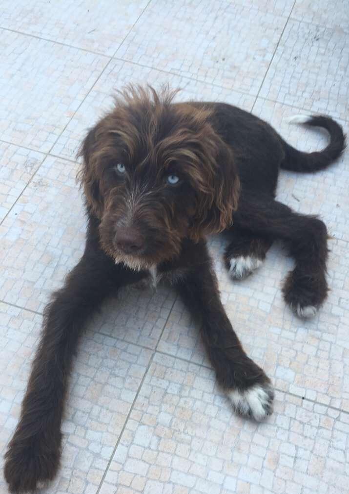 Marley, dog at The Big Chill Hostel in Lagos, Algarve, Portugal