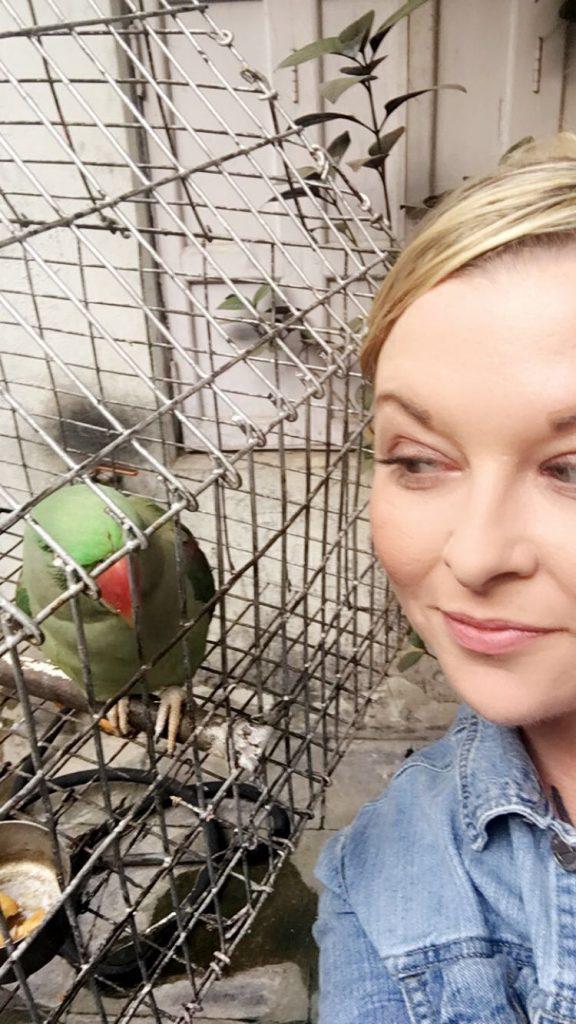 Parrot in Varanasi