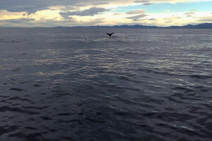 Whale-watching in Kaikora, New Zealand