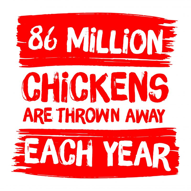 '86 million chickens are thrown away each year' - a stat that should encourage us to use up leftover chicken