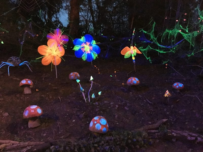 Fluoroescent flowers at the Winter Lights Parade at Bluestone Wales