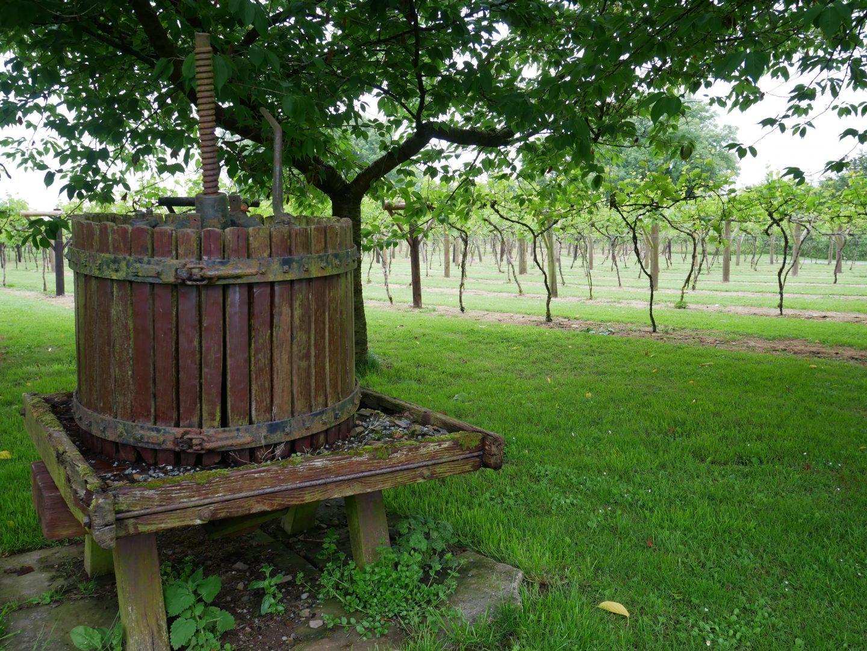 Jabajak Vineyard in Carmarthenshire, South-West Wales